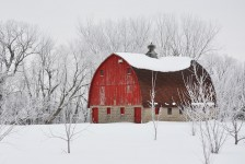 Barn and Frost